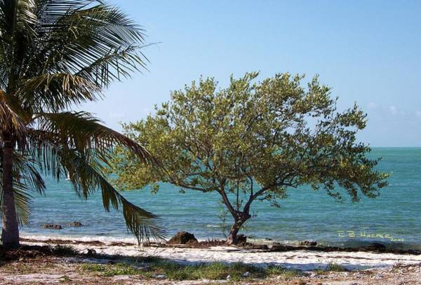 Photograph - Island Building On Coco Plum by R B Harper