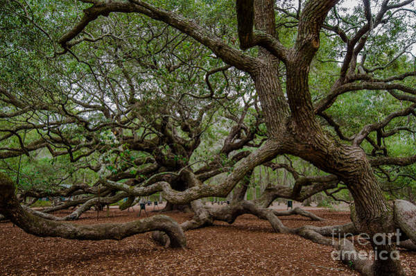 Photograph - Island Tree by Dale Powell