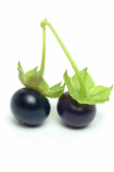 Wall Art - Photograph - Jaltomata Fruit by Bildagentur-online/th Foto/science Photo Library
