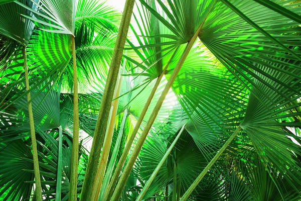 Jamaica Photograph - Jamaica, Palm Leaves by Tetra Images