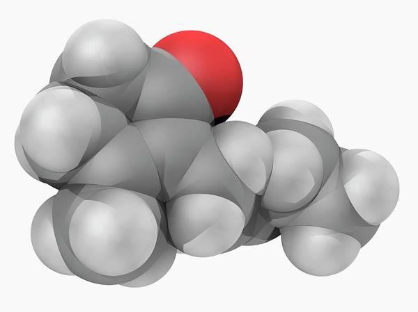 Jasmine Photograph - Jasmone Molecule by Laguna Design/science Photo Library