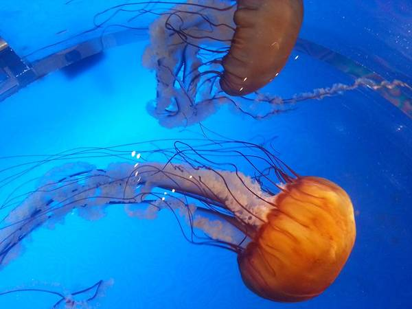 Photograph - Jelly Fish by Nikki Dalton