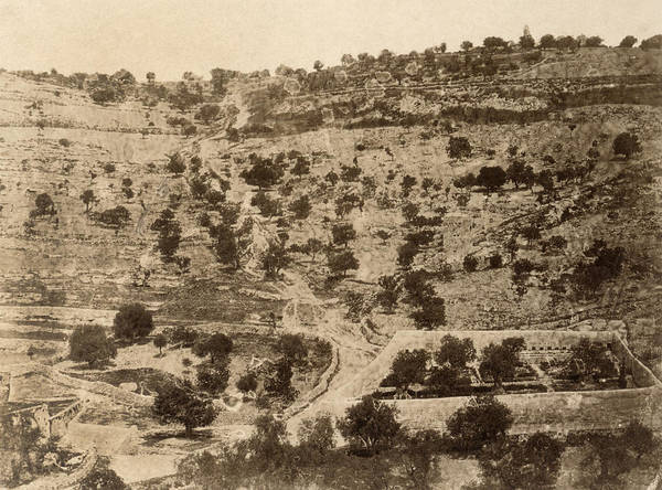 Wall Art - Photograph - Jerusalem Gethsemane by Granger