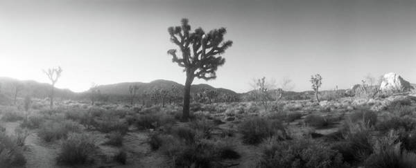 San Bernardino Photograph - Joshua Trees In A Desert At Sunrise by Panoramic Images