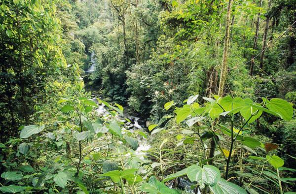 Wall Art - Photograph - Jungle Creek by F. Stuart Westmorland