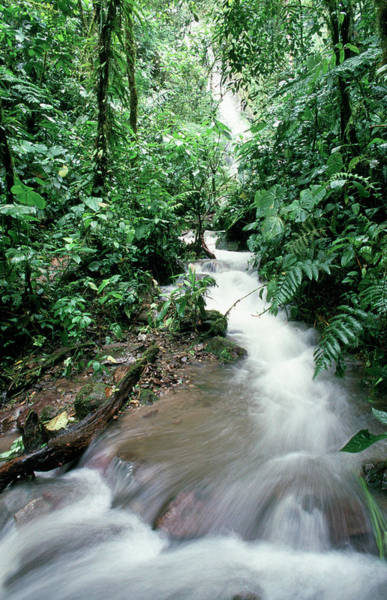 Moving Water Photograph - Jungle Waterfall by Dr Morley Read/science Photo Library