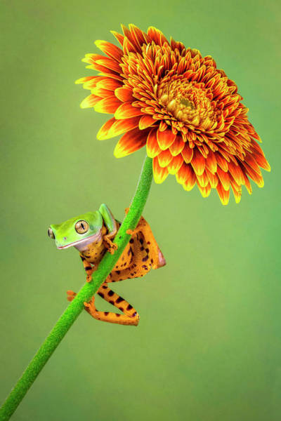 Frog Photograph - Just Hanging Around by Renee Doyle