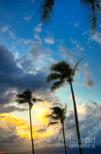 Kapalua Photograph - Kapalua Palms by Kelly Wade