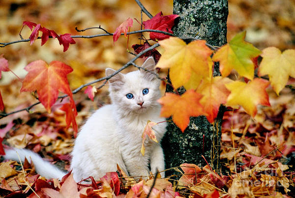Photograph - Kitten by Inga Spence