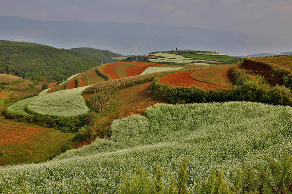 Canola Wall Art - Photograph - Kunming Dongchuan Red Land Area by Darrell Gulin