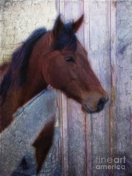 Photograph - Lady At The Gate by Lesa Fine