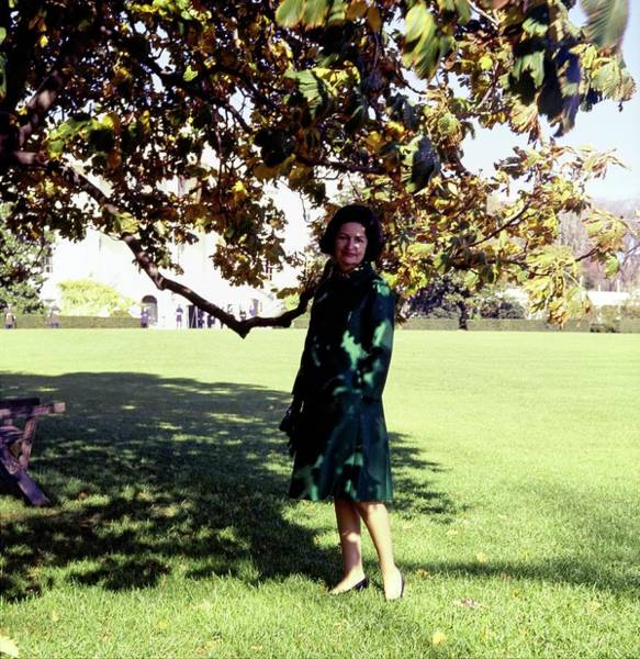 Official Residence Photograph - Lady Bird Johnson Under A Tree by Horst P. Horst