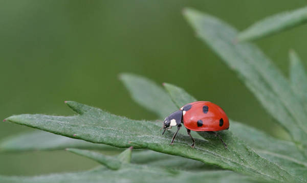 Photograph - Lady Bird by Dreamland Media