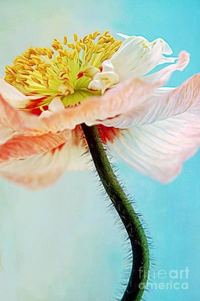Digital Art - Lady Poppy by Angela Doelling AD DESIGN Photo and PhotoArt