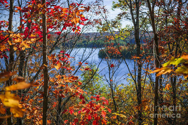 Pristine Photograph - Lake And Fall Forest by Elena Elisseeva