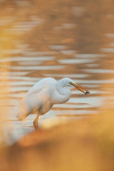 Ardea Photograph - Lake Murray San Diego, California by Michael Qualls