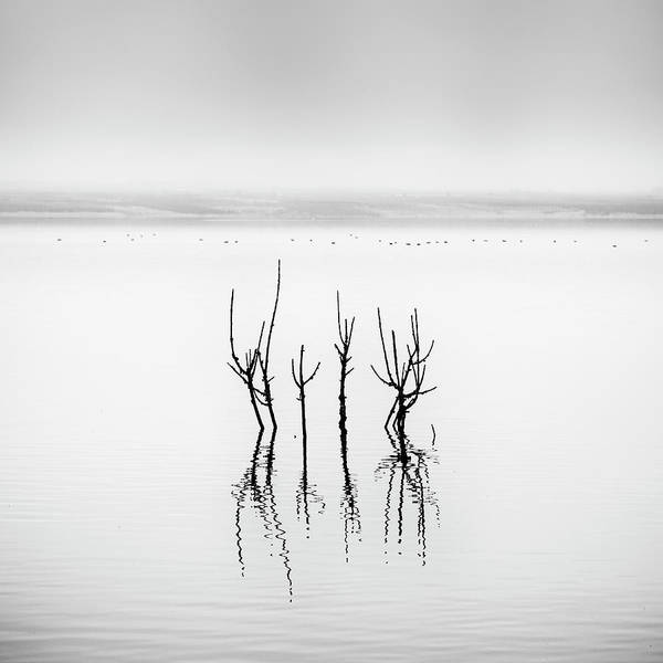 Plants Photograph - Lake Reflections by George Digalakis