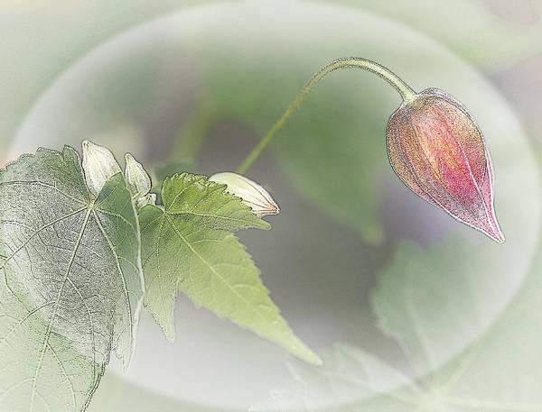 Digital Art - Lantern Flower by Barbara Smith