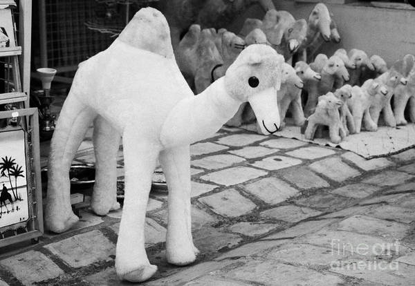 Wall Art - Photograph - Large Soft Toy Stuffed Camel Souvenir At Market Stall In Nabeul Tunisia by Joe Fox