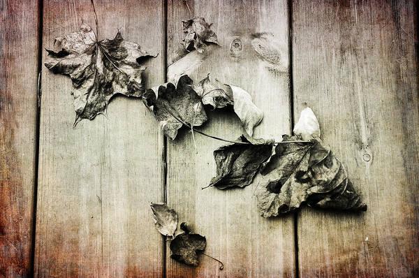 Photograph - Late Fall by Randi Grace Nilsberg