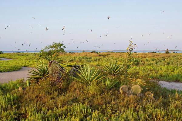 Coastal Bird Photograph - Laughing Gulls (larus Atricilla by Larry Ditto
