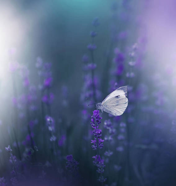 Blooming Wall Art - Photograph - Lavender Queen... by Juliana Nan