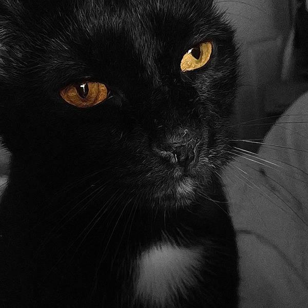 Photograph - Le Chat Noir by Natasha Marco