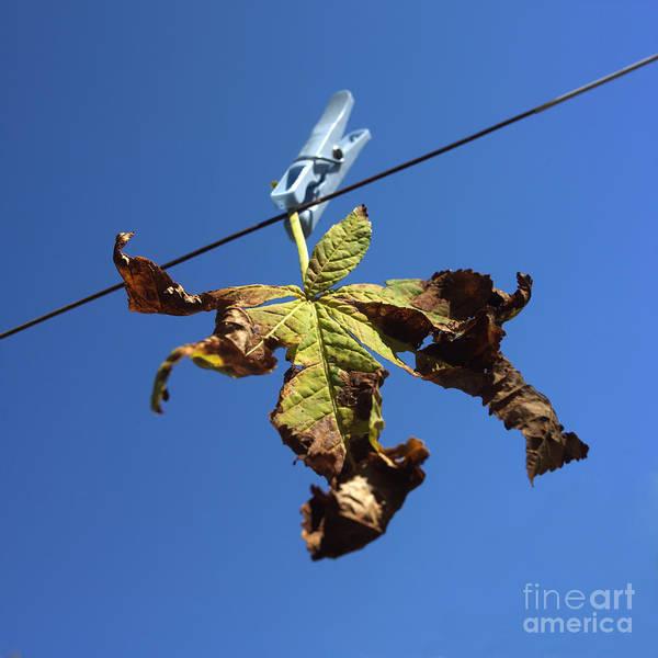 Suspended Photograph - Leaf And Blue Sky by Bernard Jaubert