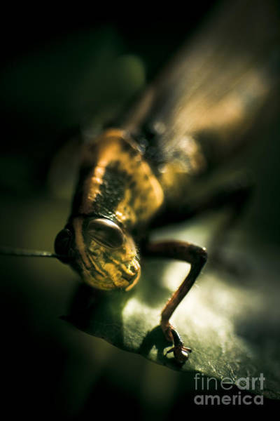 Photograph - Leaf Bites by Jorgo Photography - Wall Art Gallery