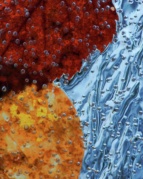 Colored Bubbles Photograph - Leaves Frozen In Ice by Allan Wallberg