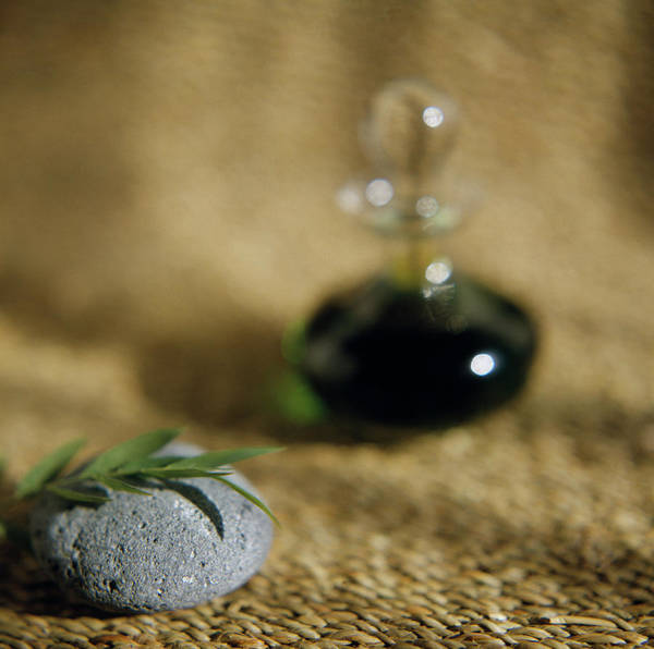 Bottle Green Photograph - Leaves On A Pebble by Cristina Pedrazzini/science Photo Library
