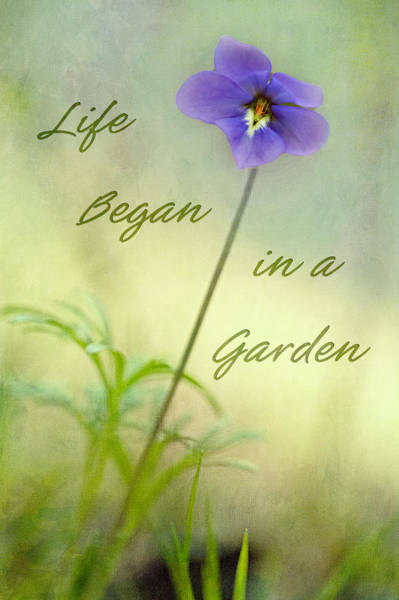 Photograph - Life Began In A Garden by Patricia Montgomery