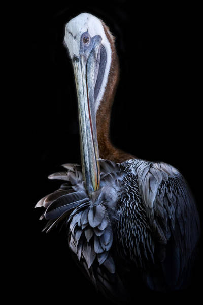 Photograph - Light As A Feathered Fan by Ghostwinds Photography