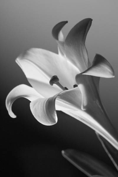 Wall Art - Photograph - Lily 3 by Blue Muse Fine Art