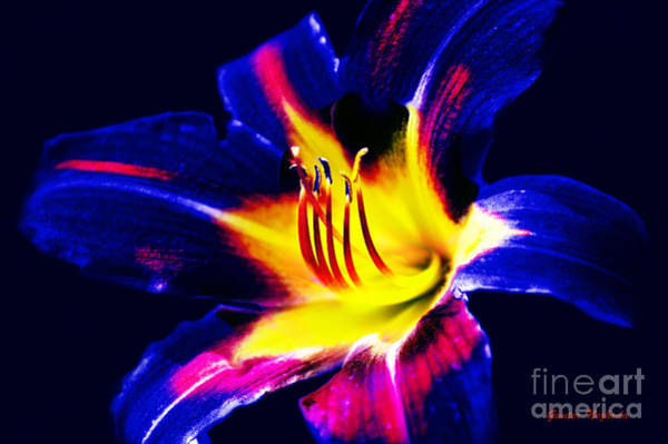 Photograph - Lily In Vivd Colors by Gunter Nezhoda