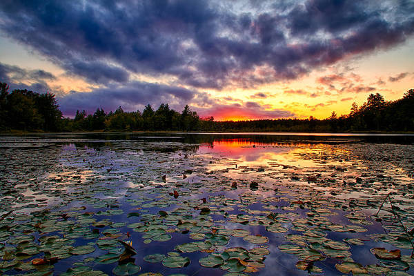 Photograph - Lily Pad Sunset by Jeff Sinon