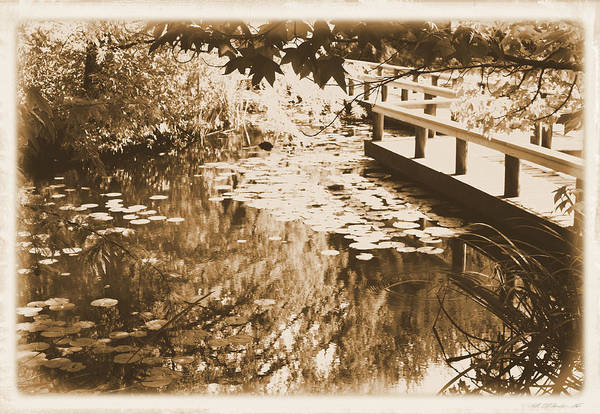 Photograph - Lily Pond by Gerry Bates
