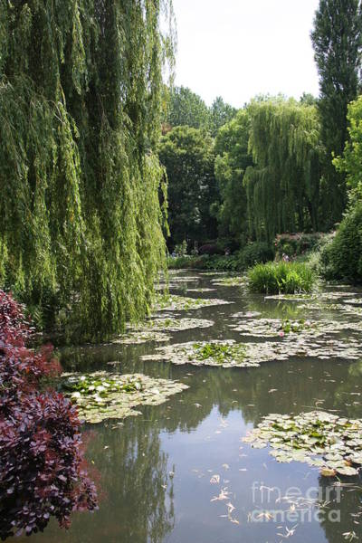 Claude Monet Photograph - Lily Pond - Monets Garden by Christiane Schulze Art And Photography