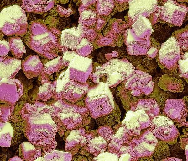 Carbonate Photograph - Limescale by Steve Gschmeissner