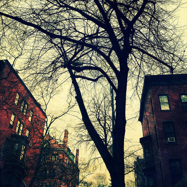 Photograph - Lincoln Place Brownstones And Trees by Natasha Marco