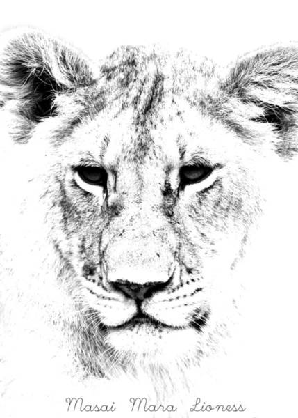 Photograph - Lion Portrait by Aidan Moran