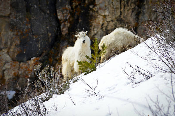 Photograph - Living On The Edge by Greg Norrell