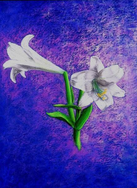 Drawing - Lockharts  Lillies by Karen Buford
