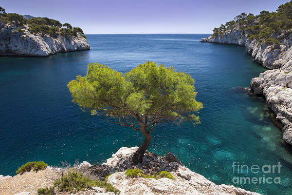 Art Print featuring the photograph Lone Pine Tree by Brian Jannsen