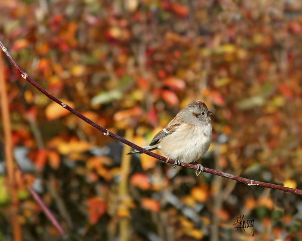 Photograph - Lone Sparrow by Stan Kwong