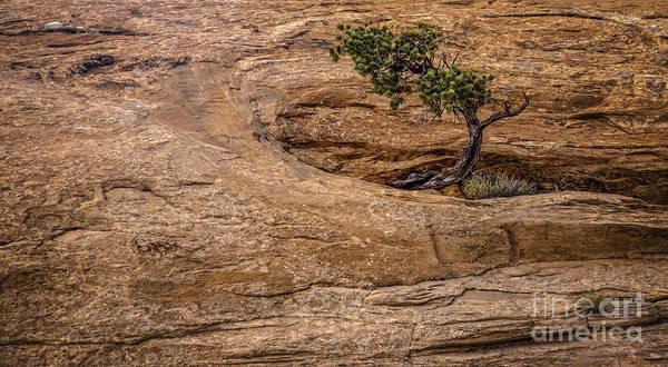 Photograph - Lone Tree by David Waldrop