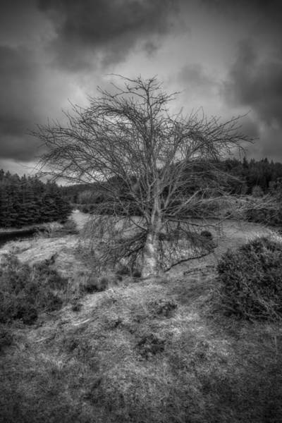 Photograph - Lone Tree by Ian Mitchell