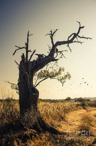 Wall Art - Photograph - Lonely Tree by Carlos Caetano