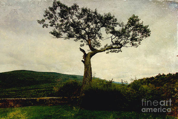 Digital Art - Lonely Tree by Trina  Ansel