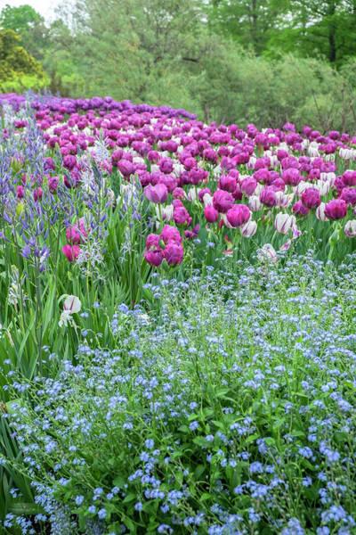 Longwood Gardens, Spring Flowers Art Print